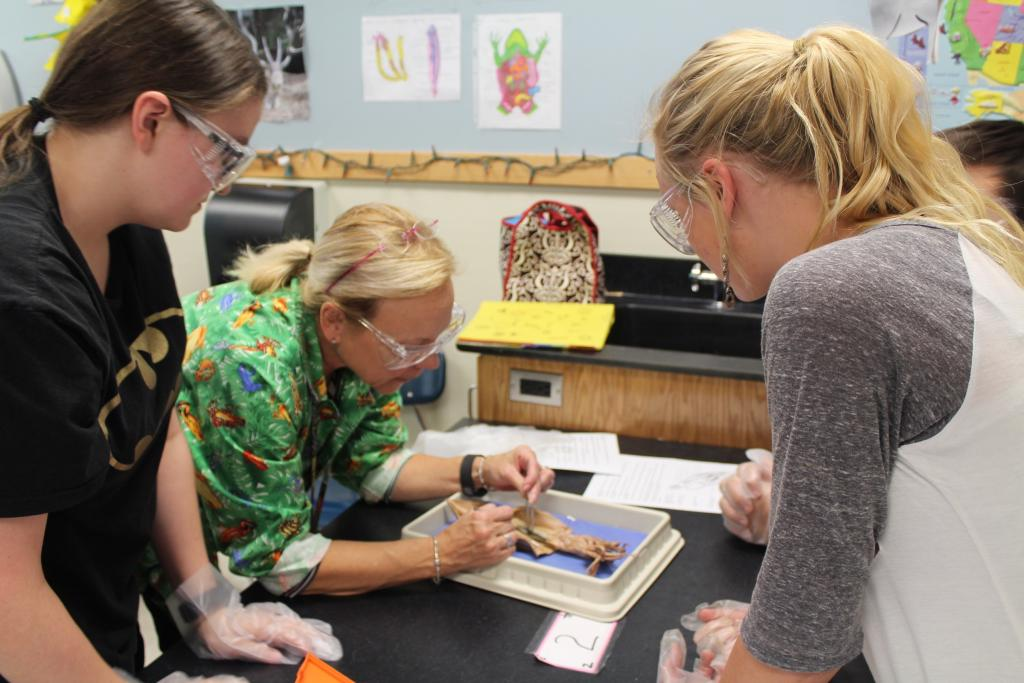 three people working on a dissection project